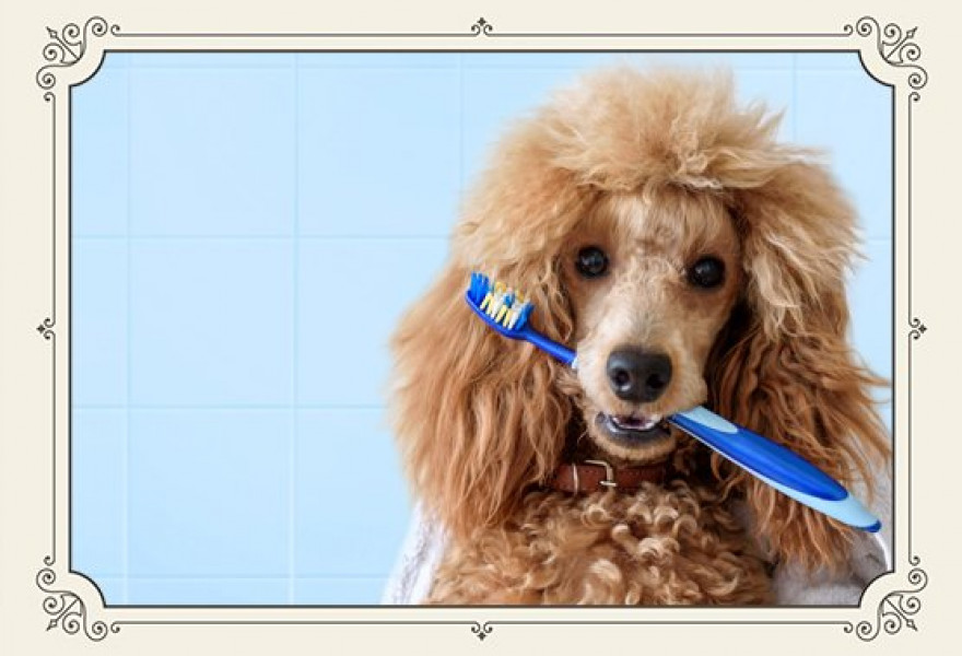 Why Dog Dental Care is Important