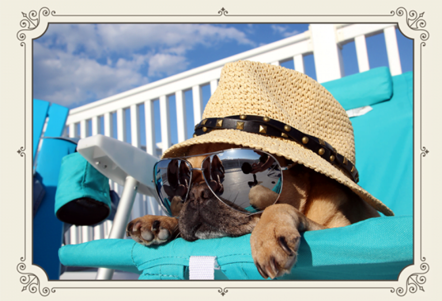 Amazing Summer Care Tips for Your Adorable Pets at Home