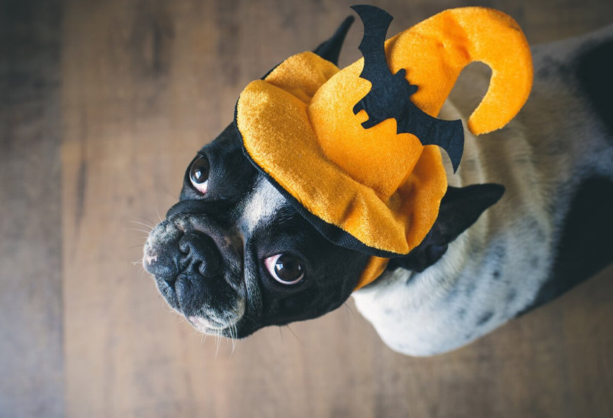 7 Tips for Optimum Halloween Pet Safety