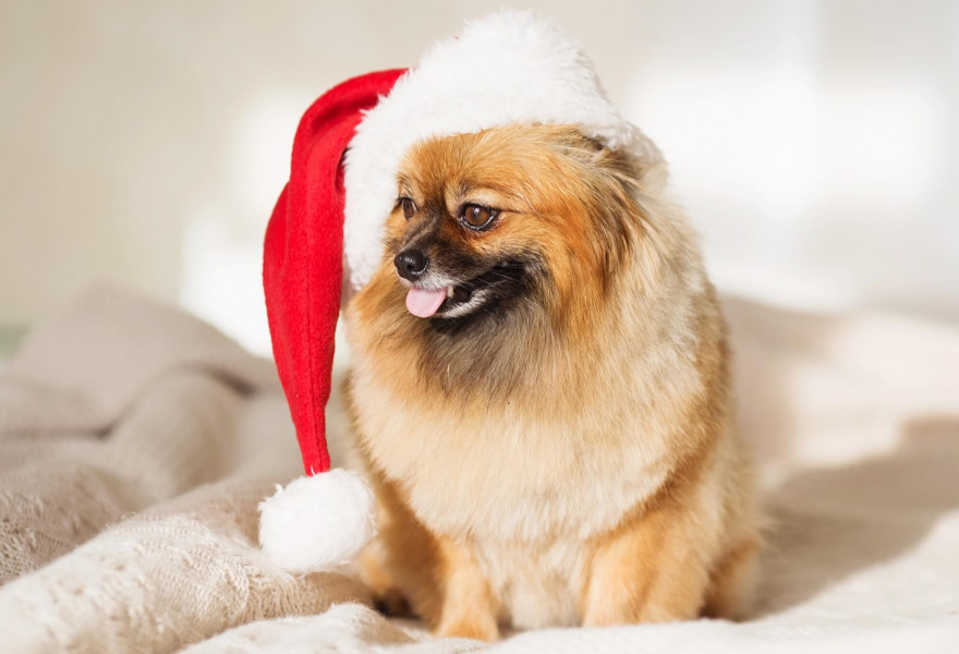 Give the Gift of Pet Grooming this Christmas