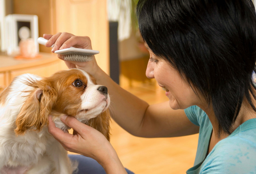 Life as Pet Groomer: What it Takes to be the Best