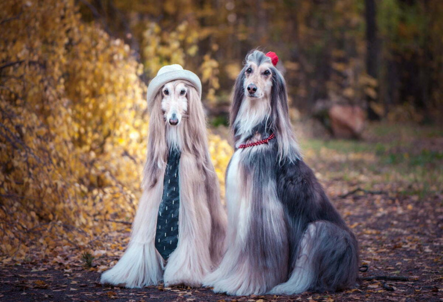 Dog Grooming Trends of Recent Years