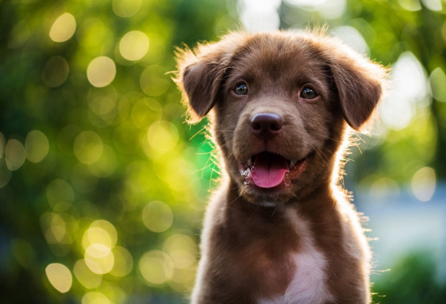 Why Spring Is the Ideal Time to Groom Your Pet