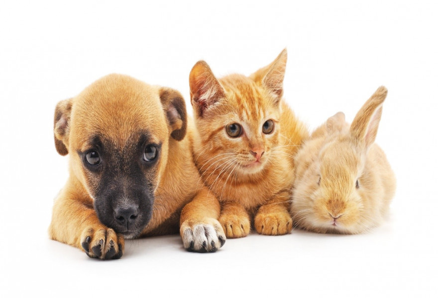 The Differences in Pet Grooming: Cats, Dogs and Rabbits