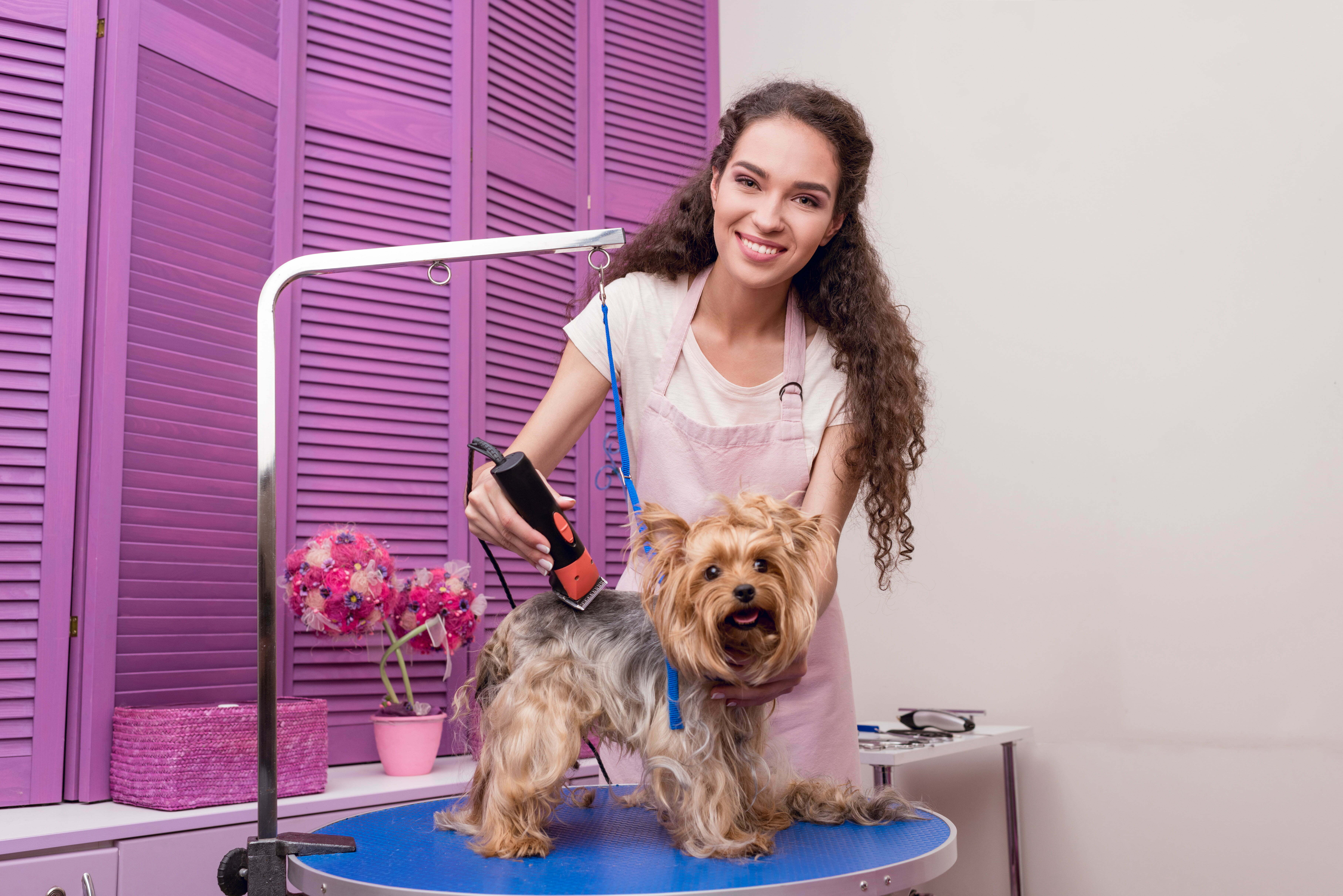great pet groomer smiling and grooming small dog