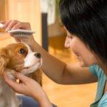 pet groomer lovingly brushing puppy, best groomer