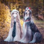 well groomed dogs dressed trendy and posing for picture