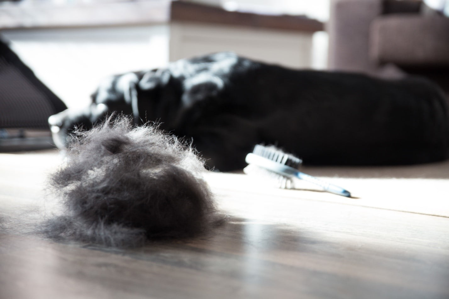 pile of pet hair on the floor next to dog after brushing in spring